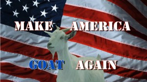 Goat Rodeo Make America Goat Again